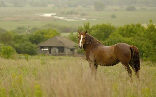 Песня скачать на андроид выйду ночью в поле с конем