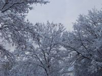 Canada first snow 3