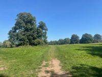 Footpath in the Park