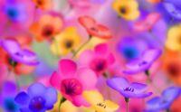 Pretty Pastel Flowers