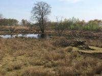 Bargerveenland