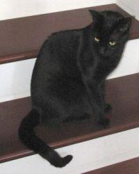 Ebony on stairs - 2014