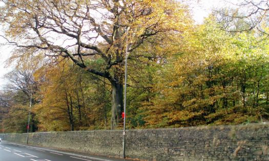 Autumn Colours in Ridgemont Park , Horwich from Chorley Old Road.   (2)