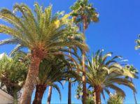 Palmen op Gran-Canaria.