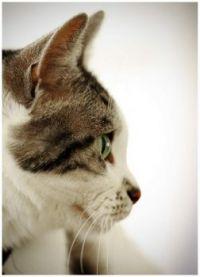 "Our Aristocat ~ aka ""Kimmy Cat"""