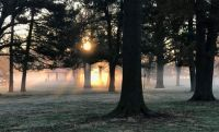 Fog at Sunrise 11.23.2020 Willmore Park, St. Louis (medium)