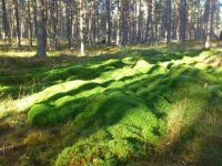 Mossy area -
