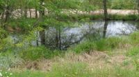 The pond in my back yard... needs a name.