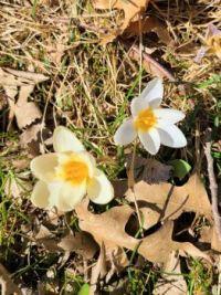 Almost Spring in Ohio