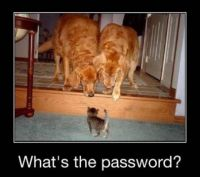 What's the password word ?