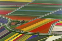 Fields in the Netherlands