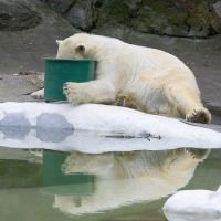 THE MORNING AFTER THE ZOO'S XMAS PARTY