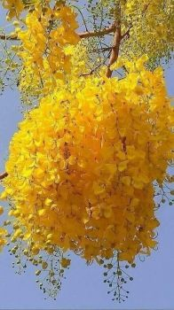 Yellow Flowering Plant