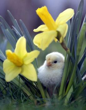 BEAUTIFUL FLOWER AND CUTE CHICK