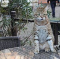 A cat in France