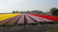 holland tulpen land