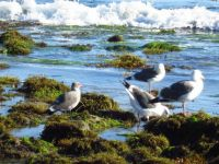 Santa Barbara - low tide
