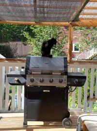 Ebony on barbecue - 2020