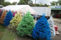 San Juan Christmas trees