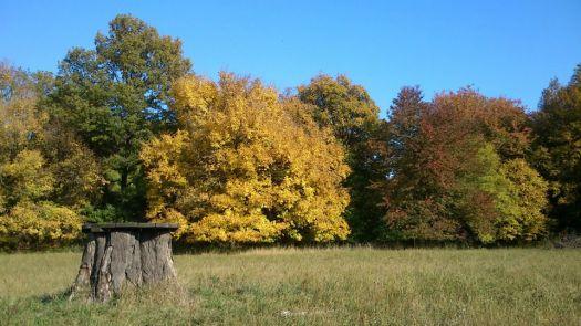 autumn, krása jesene