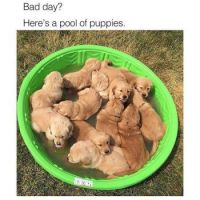 Pool of puppies