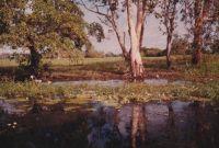 Yellow Waters Billabong, Kakadu, Northern Territory, Australia