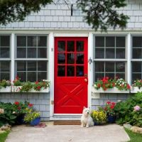 red door/white dog