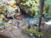 Glacier National Park, Montana, USA  McDonald Creek, Johns Lake trail