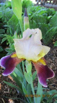 001 My Iris