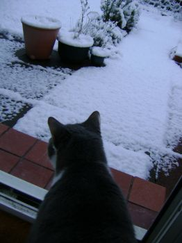 Ash - Snow? Hmmm, don't think I'll want out this morning!