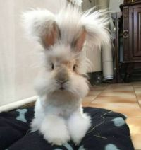 Would you wike a wittle wabbit for a pet