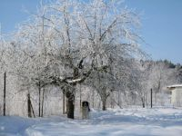 Zima / Winter, Radostov, Česko / Czechia (31. 1. 2010)