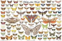 """Themes """"Insects"""" - Moths"""