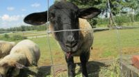 Who are ewe looking at?