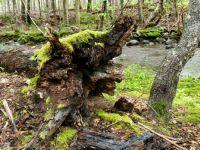 macintosh brook, cabet trail