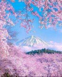 Mount Fiji in Japan
