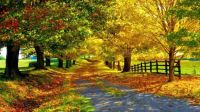 Color-of-autumn-country-road-fallen-autumn-leaves-