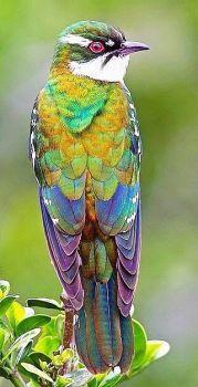 Wat een mooie kleurtjes