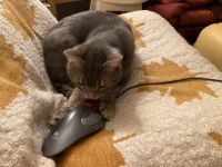 Gotcha! A game of cat and mouse! :-))