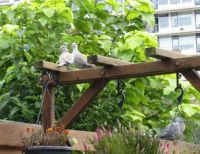 Such cute visitors on my Pergola Planter today....