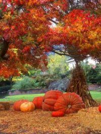 The Beginning of Fall-Pumpkins and Corn Stalks