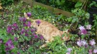 Ferdy - pretending to be ground cover