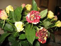 Flowers from the kids