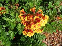Close Up of Bloom on Bush