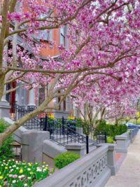 BOSTON-Spring 2020