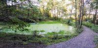 rybníček Brčálník