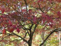 October - Asheville, NC