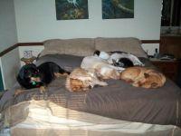 Doggie Nap Time