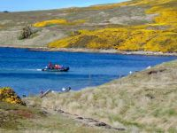 Going Ashore, Carcass Island, the Falklands