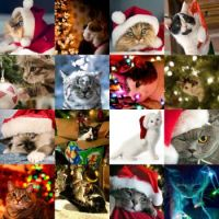 To all cat lovers - christmas cats